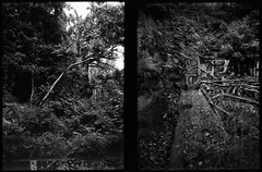 Urban Jungle (Hasse Linden) Tags: trees film analog forest dark graffiti halfframe ilford fp4 agat18k expiredfilm pellicola halfframecamera
