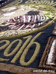 Alfombra Corpus (David del Rey78) Tags: laorotava tenerife canarias corpuschristi paisaje tradicin costumbre arte flores alfombras floral design nature religiousart 2016