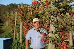 IMG_5940 (mavnjess) Tags: 28 may 2016 harvey edward giblett newton orchards manjimup harveygiblett newtonorchards cripps pink lady crippspinklady popaharv eating apple crunch crunchy biting apples pinklady pinkladyapple harv gibbo orchard appleorchard orchardist