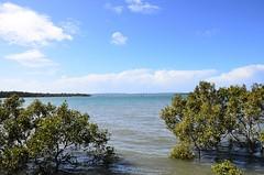 LOX_2992 (LoxPix2) Tags: loxpix ferry wellingtonpoint australia architecture aircraft boat birds building catamaran trimaran clouds panorama park photos pelican panoramic coochiemudloisland queensland