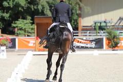 IMG_7612 (dreiwn) Tags: dressage dressur dressuur pferd reitturnier turnierreiten pferdesport horse horseback horseriding equestrian reitverein dressurprfung kandare doublebridle reiten pferde reitplatz ridingarena