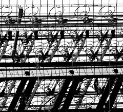 coils, springs and shadows  (re-post) (~nevikk~) Tags: shadows abstract coils springs metallicobjects mattresscomponents bw repost ladder kevinkelly