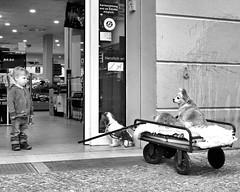 Doggiestyle (floressas.desesseintes) Tags: berlin prenzlauerberg hunde dogs supermarkt supermarket kind child junge boy kleinerjunge littleboy streetfotografie schwarzweis
