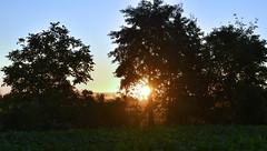 Guten Morgen Deutschland (Gnter Hentschel) Tags: deutschland gutenmorgen gutenmorgendeutschland morgen germany germania alemania allemagne europa nrw sonne sonnenschein sonnenaufgang windrder hentschel gnter outdoor flickr guenter nikon d5500 nikond5500
