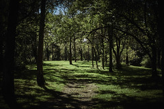 20160921_DSC5323 (Todd Plunkett) Tags: parks terrain path tree plant patriciaallynpark springboro ohio unitedstates usa