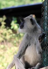 sri_lanka_trincomalee_05 (Kudosmedia) Tags: sri lanka trincomalee nelson fort fredrick harbour temple coast beach deer monkey legend fortress asia claringbold trevor