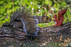 Origami Sharing squirrel 1 (FoldedWilderness) Tags: origami squirrel friend sharing tree park forest peanut