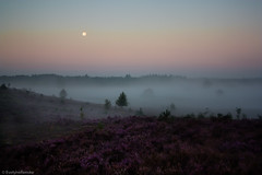 Heather landscape misty sunrise (EvelyneRenske) Tags: 2016 maan mist publicatie renderklippen uitzicht