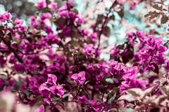 Botanical Series2 (Elena Picart) Tags: elenapavlova floralartprint interiors modern minimal flowerphotographs floralart botanicalprint flowerphotography garden spring decor naturedecor blossoms picargallery