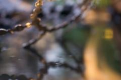 Arbres & Paysages - Le Jardin par Excellence (Simon Buchou) Tags: marseille bordeaux jardin plante paysagisme paysagiste aixenprovence vgtal arbres et paysages arcachon gironde provence simon buchou olivier cocostegue guylain jossand laurent maero maro sculpture bassin bambou ambiance parc chanot cration photographie lumire soleil minrale garden plant mediterane midi prado
