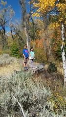 Olsen and Jovie on a tree (Aggiewelshes) Tags: phone stylo september 2016 hiking jardinejuniper fallcolors olsen jovie