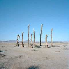 nihilist palms. lucerne valley, ca. 2014. (eyetwist) Tags: eyetwistkevinballuff eyetwist mojavedesert landscape bleak deadpalms palm trees vista lucernevalley mamiya 6mf 50mm kodak portra 160 mamiya6mf mamiya50mmf4l kodakportra160 ishootfilm analog analogue film emulsion mamiya6 square 6x6 mediumformat 120 primes filmexif iconla epsonv750pro filmtagger ishootkodak 6 mojave desert california highdesert roadsideamerica americana typology lonely desolate middleofnowhere bluesky mountains minimalist horizon eggleston boring banal ordinary american west nihilist dead decay stumps palms barren void empty flat minimalism