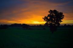 Majestic Dawn #dawn #sunrise #sun #sky #autumn #nikon #nikond5300 #nikonphotography (nds6346) Tags: dawn sunrise sun sky autumn nikon nikond5300 nikonphotography