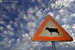 Sheeps & Cows (ChimissoP) Tags: sign cartello segnaletica segnale segnalistradali segnali