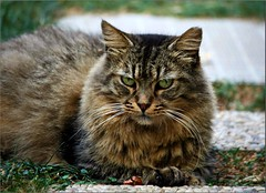 The cat =^..^= (Viola & Cats =^..^=) Tags: cats pets animals felini felines gatti animali mygearandme mygearandmepremium mygearandmebronze mygearandmesilver mygearandmegold mygearandmeplatinum mygearandmediamond