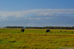 2011-03 D2a - Amboseli Park-70-1.jpg (cassio.scomparin) Tags: africa kenya safari elefante riftvalley paises oltukai qunia animaisewildlife
