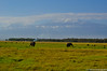 2011-03 D2a - Amboseli Park-70-1.jpg (cassio.scomparin) Tags: africa kenya safari elefante riftvalley paises oltukai quênia animaisewildlife