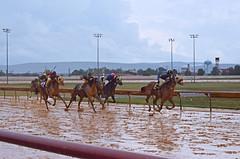 2012-08-26 (103) r4 Javier Rivera on #6 King Harry (JLeeFleenor) Tags: horses caballo cheval photography photos uma stretch wv cal westvirginia jockeys winner cavallo cavalo pferd equestrian kin muddy kuda alogo equine hest thoroughbreds soos hevonen sloppy cuddy paard cavall kon koin 馬 hast charlestownraces häst ceffyl лошадь 马 koń faras hestur סוס perd حصان konj кон άλογο घोड़ा capall beygir yarraman stretchrun pfeerd westvirginiaracing wvracing