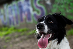 Our dog under a bridge (Thomas de Haan) Tags: dog tongue graffiti tong friesche stabij