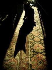 Na na na na na na... (sutithecat) Tags: autumn shadow silhouette cat lights kitten cookie tabby na shorthair british cica catman sti stithecat