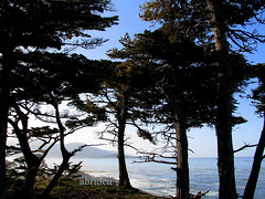 Cypress Trees Sea view ~ #338 Explored 15 Sep 2012 (abrideu) Tags: california canon ngc npc pebblebeach scape cypresstrees seaview explored virtualjourney abrideu fleursetpaysages mygearandme mygearandmepremium