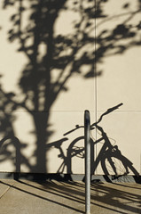ghost of bicycles past (Seakayem) Tags: shadow tree bike bicycle minolta sony canberra anu acton slt a55 australiannationaluniversity
