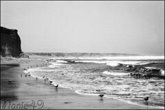 Playa, Reserva Paracas, Pérou. (nanie49) Tags: mer beach peru nikon f100 playa hp5 24mm plage islas pacifico paracas pérou iles ballestas océan pacifique réserve réserva