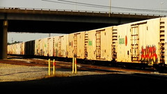 REEFERS (BLACK VOMIT) Tags: railroad orange cars car yard train graffiti virginia box juice rr richmond refridgerator va rails freight tropicana boxcars reefer acca reefers