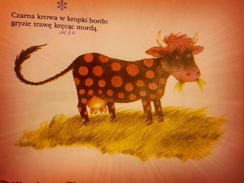 Czarna krowa w kropki bordo ©  quirischa