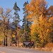 YNP-GTNP-fall-colors06