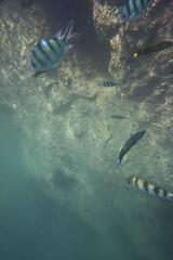 DSC09222 (andrewlorenzlong) Tags: fish coral thailand snorkeling kohchang kohrang kohrangyai korangyai
