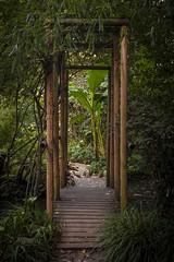 Giardino Botanico6 (cioligiovanni) Tags: india lake macro lago garda italia tramonto bokeh tunnel botanico tramonti fiori nebbia piante palma brescia bianco giappone cina giardino fumo gardasee ponti stagno bambù ponticelli vignettatura