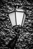 SansSouci Lamp (starpuck) Tags: light white black lamp germany streetlight europe streetlamp ivy sanssouci potsdam lightfixture travelphotography englishivy outdoorlight