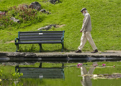 A Stroll Through The Park (grahambrown1965) Tags: park pond man walk walking stroll strolling bench parkbench water flower flowers lotus lotusflower lotusflowers green ricohimagingcompanyltdpentaxk3ii smcpentaxdfamacro100mmf28wr pentax k3ii