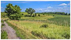 A Dandy Road (myoldpostcards) Tags: rural country landscape hills trees dirtroad gravelroad bandy road rd menardcounty centralillinois illinois il unitedstates myoldpostcards vonliski season summer