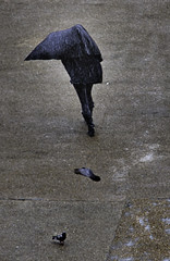 London_DSC5498F (JPPimenta) Tags: rain pigeons london art artistic street photgraphy color colour