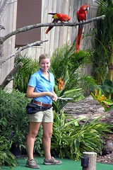 Brookfield Zoo (Vinny Gragg) Tags: bird birds fowl feathers brookfieldzoo zoo brookfieldillinois brookfield illinois prettygirls prettywoman sexywoman girl girls parrots parrot festivalofflight plant plants