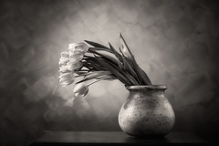 Tulips BW (shutterclick3x) Tags: tulips flowers blackandwhite bw studio frankloose