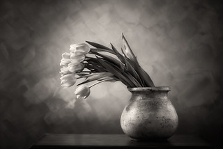 Tulips BW