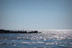 heading into the blue (judecat (relaxing by the sea)) Tags: jetty capemayinlet atlanticocean water ocean sea sparkling blue thundercatdolphinwatch wildwood newjersey