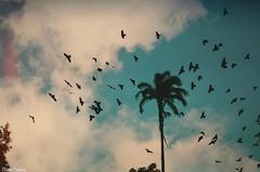 Contemplando uma tarde . (Eline Cristine) Tags: recife brasil mundo word tones tons birds silhuetta animais fotografia 2016 vintage film coqueiro dia blue azul branco magic momentos art arte vida inspiraes energia sun sol sunset pordosol tarde