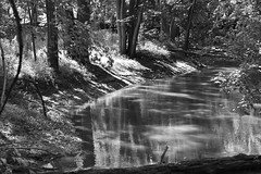 _DSC0119 (snastacey17020394) Tags: river trees shadow water nature black white sunlight leading lines