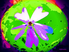 Wildflower (Stephenie DeKouadio) Tags: canon outdoor painting abstract abstractart art artistic flowers flower color colour colorful plant