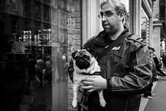 Pug Life (Leanne Boulton) Tags: people monochrome urban street closeup candid portrait streetphotography candidstreetphotography streetlife man male face facial expression look emotion perspective pug dog pet animal pooch window reflections tone texture detail depth natural outdoor light shade shadow grain city scene human life living canine humanity society culture canon 7d wideangle black white blackwhite bw mono blackandwhite glasgow scotland uk