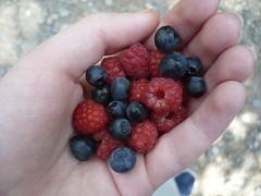 (ladyedit) Tags: nature fruit fruits hand strawberry strawberries blueberry blueberries