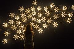 Odyssey: Navigating Nameless Seas (BP Chua) Tags: odyssey navigating nameless sea singapore sam artmuseum exhibit flowers nikon d750 lights beautiful