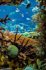 Barriera Corallina - Oceanario Lisbona (antoniosimula) Tags: oceanario lisbon lisbona lisboa portogallo portugal area expo fish flora fauna nikon d3200 35mm 70300 tamaron ocean species pacific atlantic indian