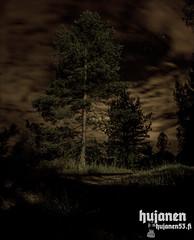 Hanging? (hujanen53) Tags: lappeenranta suomi finland kesä summer syksy autumn canon canonef35mmf20 canoneos700d eos ef night yö yökuva tree puu taivas sky nature luonto longexposure longexposures pitkävalotusaika valotusaika skandinavia scandinavia