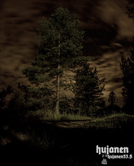 Hanging? (hujanen53) Tags: lappeenranta suomi finland kes summer syksy autumn canon canonef35mmf20 canoneos700d eos ef night y ykuva tree puu taivas sky nature luonto longexposure longexposures pitkvalotusaika valotusaika skandinavia scandinavia