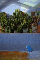 Bras de mer (Phileo1) Tags: saunajeebe saunajeeurbex saunaj saunajurbex saunajona saunajonaurbex saunaurbex saunamosak saunamosaikurbex saunamosac saunamosaicurbex baindevapeur dampfbad vaporbath steambath banodevapor bagnoavapore stoombad chaleur wrme heat calor calore hitte bain bath bad bano bagno mosaque mosaik mosaic mosaico mozaek abandonne abandoned verlassen abandonado abbandonato verlaten urbexphotography urbexdecay urbexdecaying urbexexploring urbexwandering urbexplaces urbanphotography urbandecay urbandecaying urbanexploring urbanwandering urbanart urbanexploration decay decayed decaying decayingplaces explore exploringplaces wanderingplaces forgotten forgottenplaces abandonedplaces lostplaces neglected neglectedplaces lieuxoublis derelict derelictplaces phileo phileo1 fotophileo phileourbex phileo1urbex fotophileourbex
